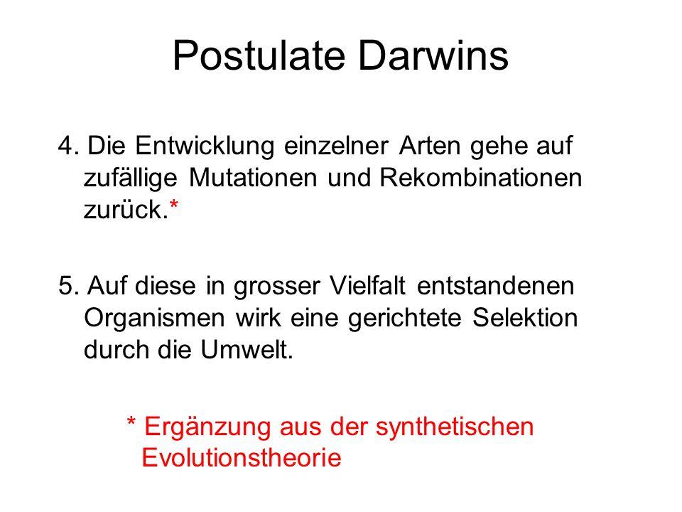 Postulate Darwins 4. Die Entwicklung einzelner Arten gehe auf zufällige Mutationen und Rekombinationen zurück.*