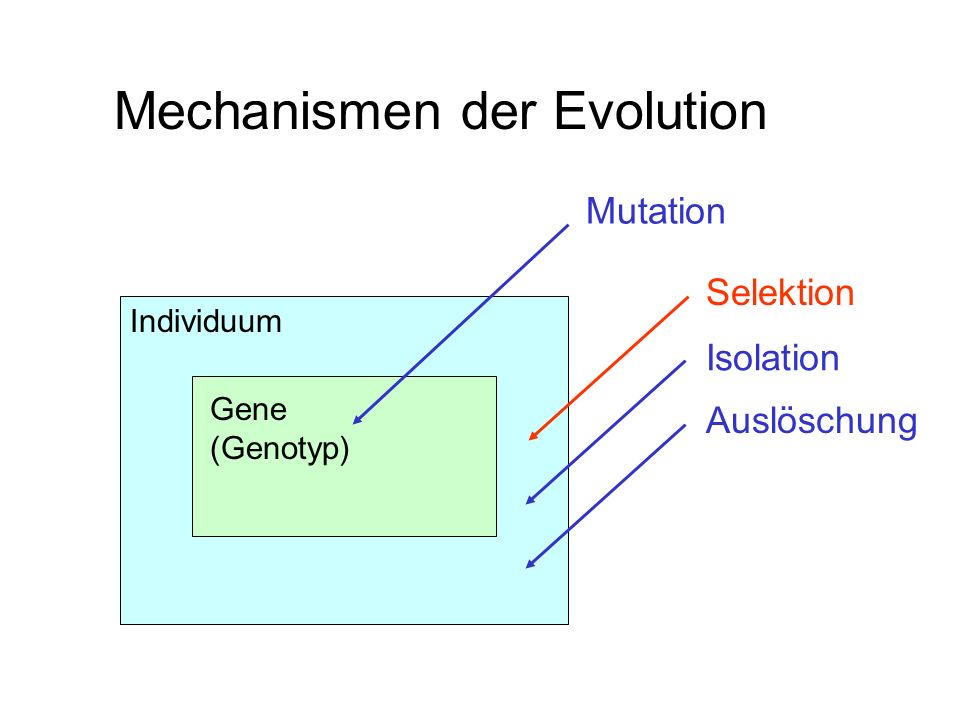 Mechanismen der Evolution