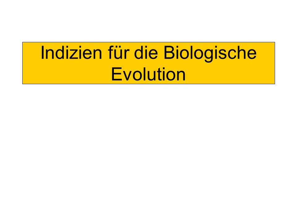Indizien für die Biologische Evolution
