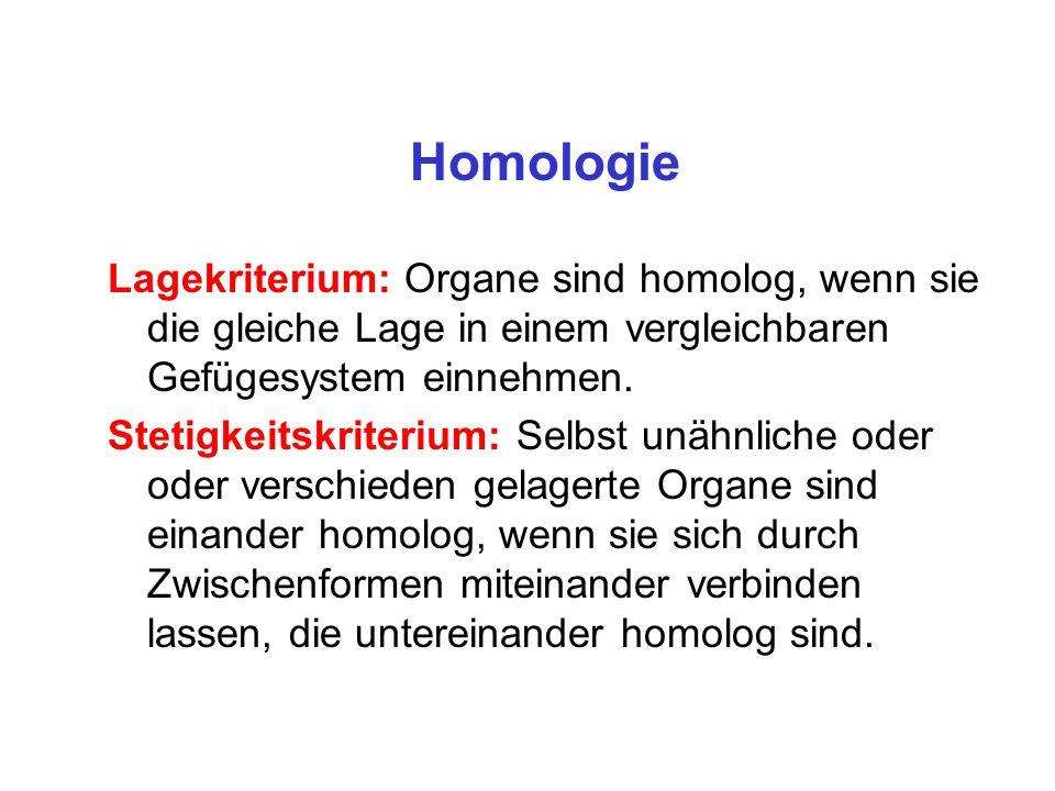 Homologie Lagekriterium: Organe sind homolog, wenn sie die gleiche Lage in einem vergleichbaren Gefügesystem einnehmen.