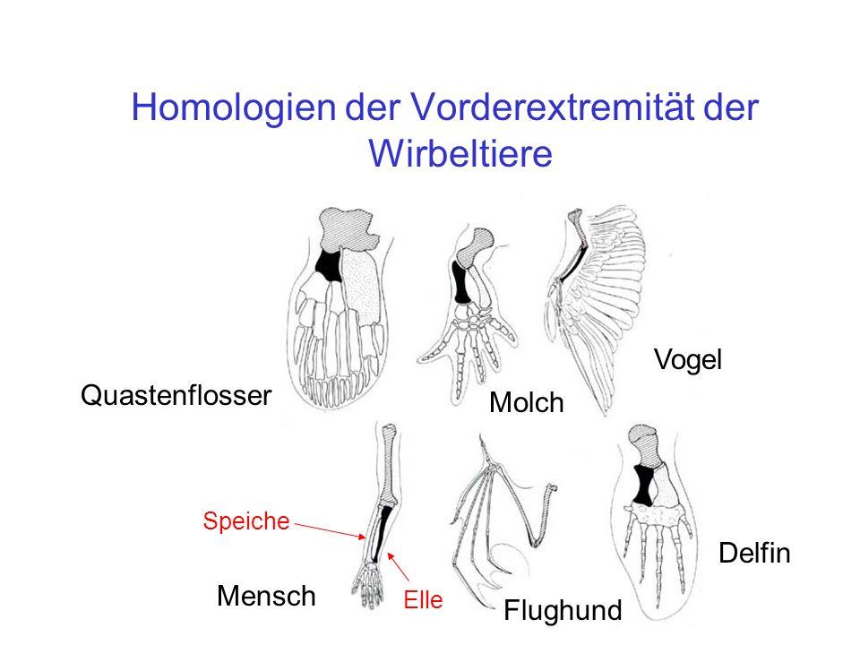 Homologien der Vorderextremität der Wirbeltiere