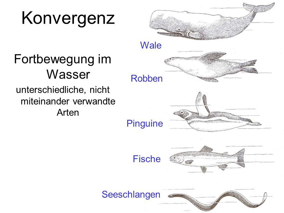 Konvergenz Fortbewegung im Wasser Wale