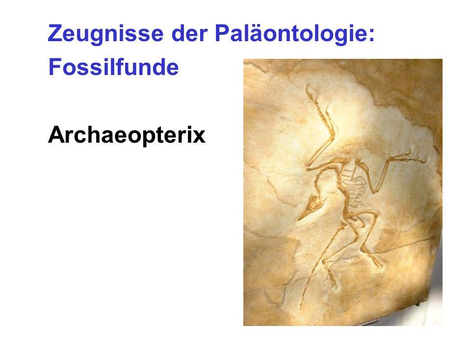 Zeugnisse der Paläontologie: