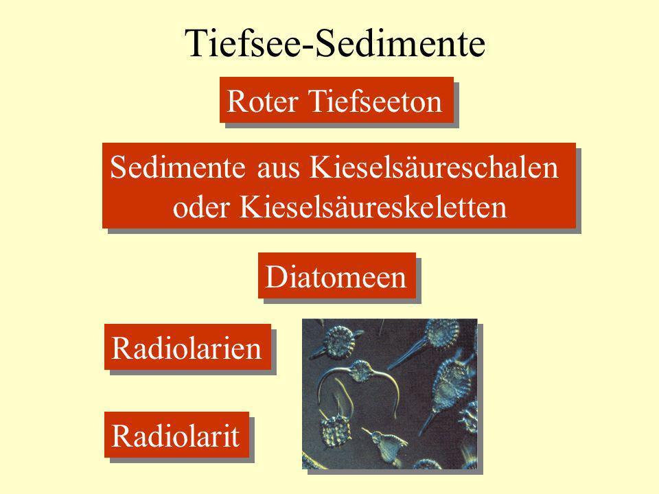 Tiefsee-Sedimente Roter Tiefseeton Sedimente aus Kieselsäureschalen