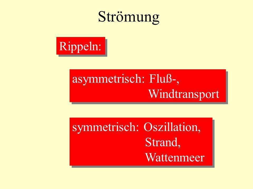 Strömung Rippeln: asymmetrisch: Fluß-, Windtransport