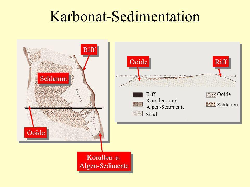 Karbonat-Sedimentation