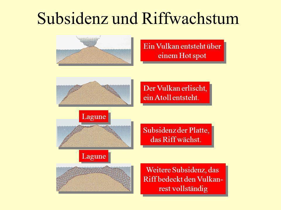 Subsidenz und Riffwachstum