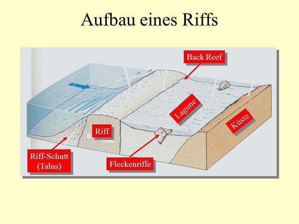 teil 15 vorlesung ss 2005 mo di mi ppt herunterladen. Black Bedroom Furniture Sets. Home Design Ideas