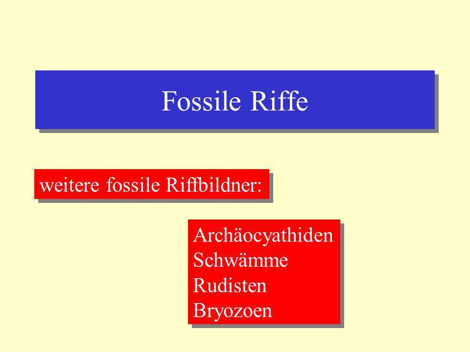 Fossile Riffe weitere fossile Riffbildner: Archäocyathiden Schwämme
