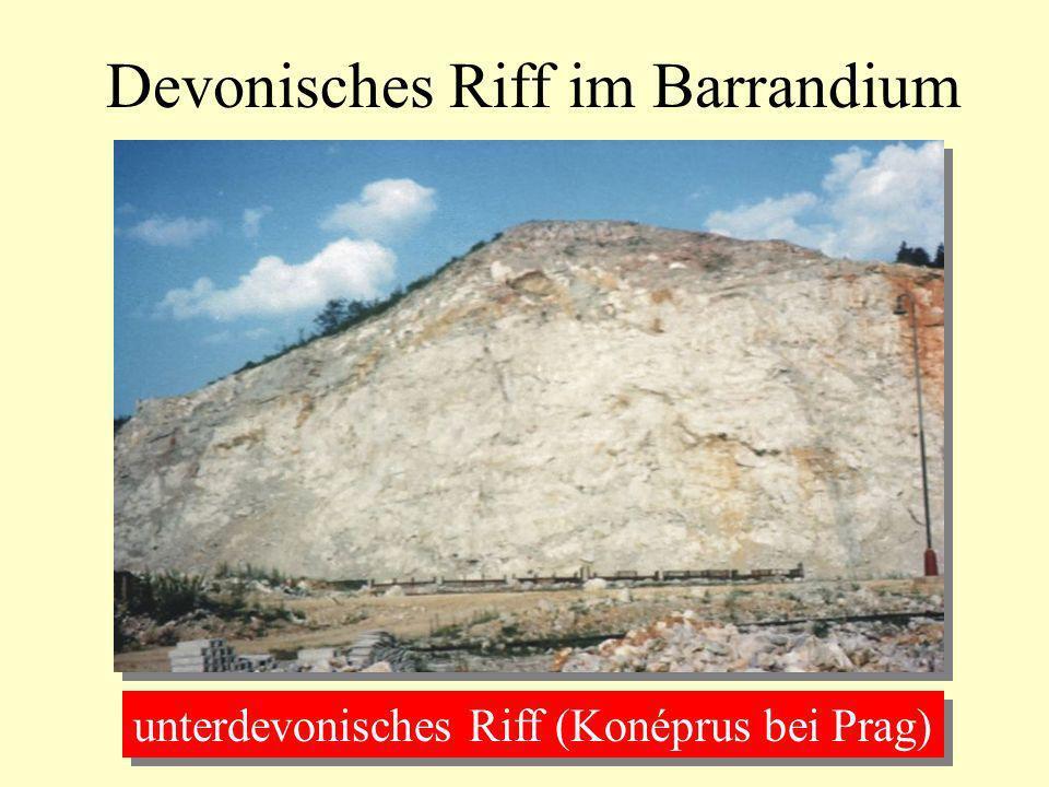 Devonisches Riff im Barrandium