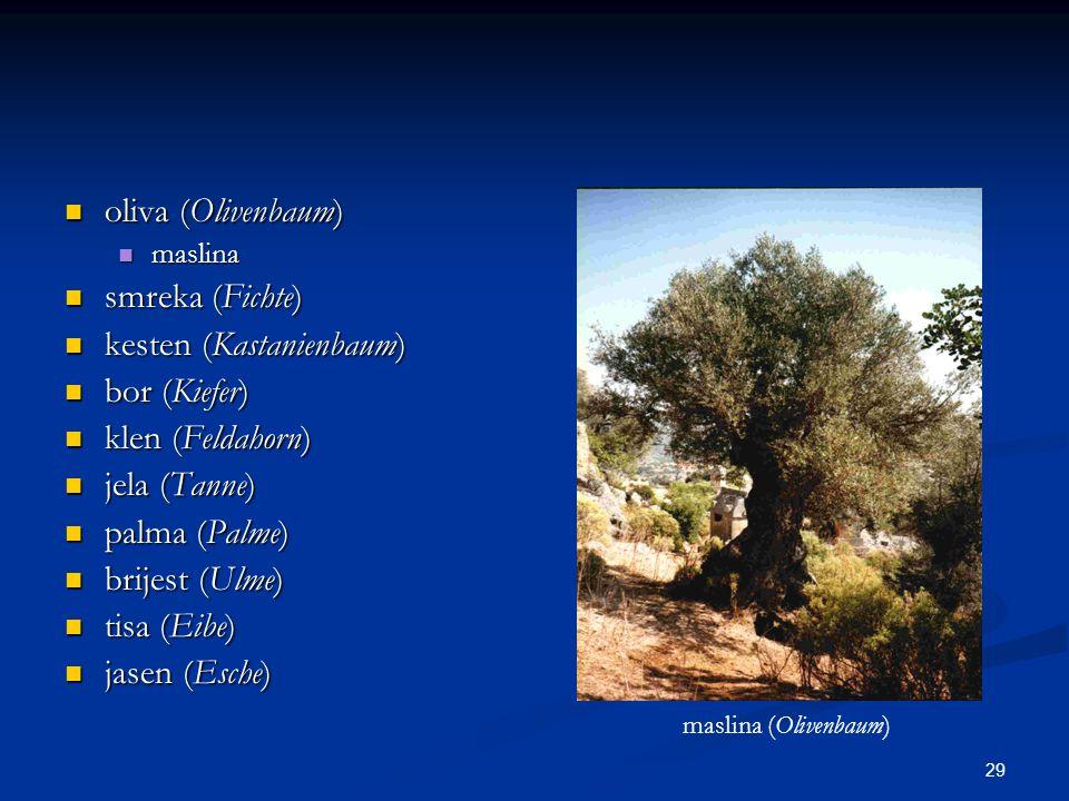 kesten (Kastanienbaum) bor (Kiefer) klen (Feldahorn) jela (Tanne)