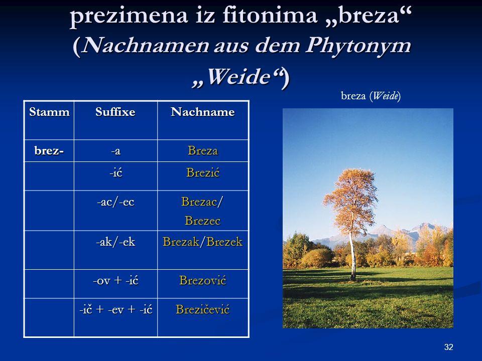 """prezimena iz fitonima """"breza (Nachnamen aus dem Phytonym """"Weide )"""
