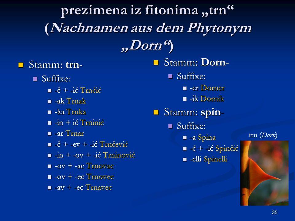 """prezimena iz fitonima """"trn (Nachnamen aus dem Phytonym """"Dorn )"""
