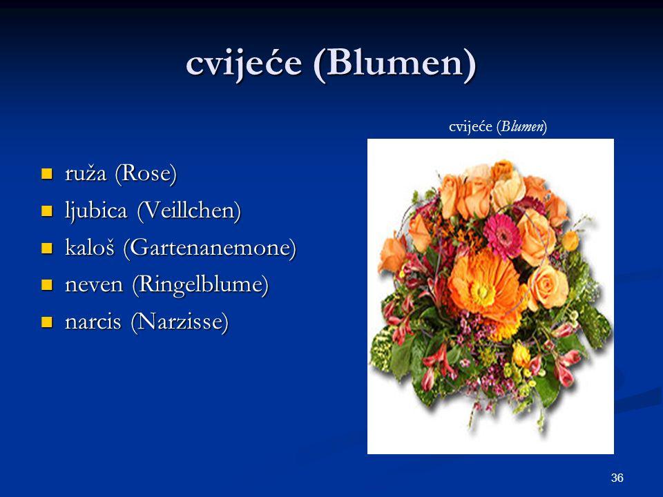 cvijeće (Blumen) ruža (Rose) ljubica (Veillchen) kaloš (Gartenanemone)