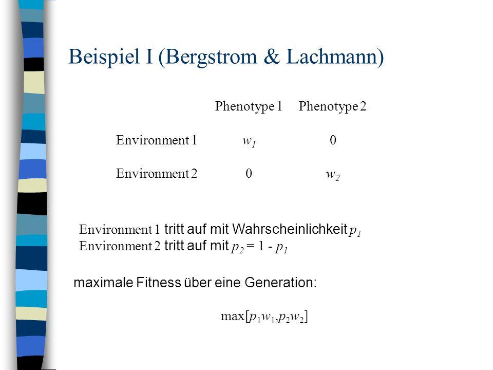 Beispiel I (Bergstrom & Lachmann)