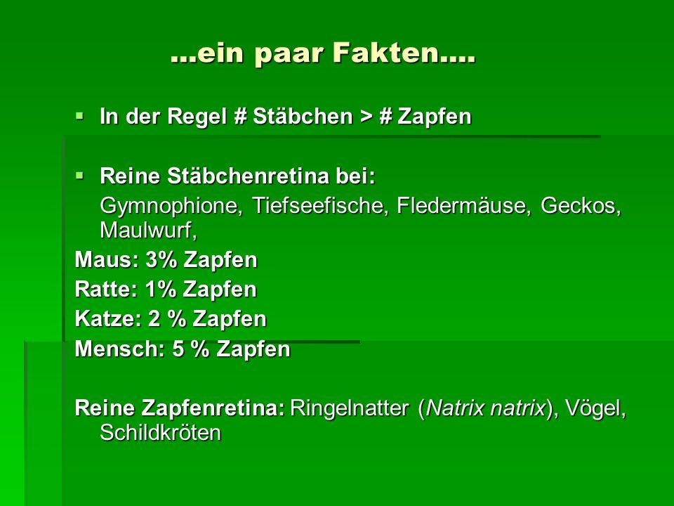 ...ein paar Fakten.... In der Regel # Stäbchen > # Zapfen