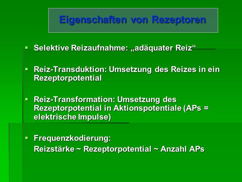 Eigenschaften von Rezeptoren