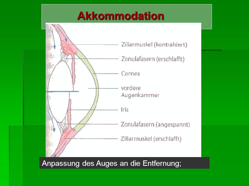 Akkommodation Anpassung des Auges an die Entfernung;