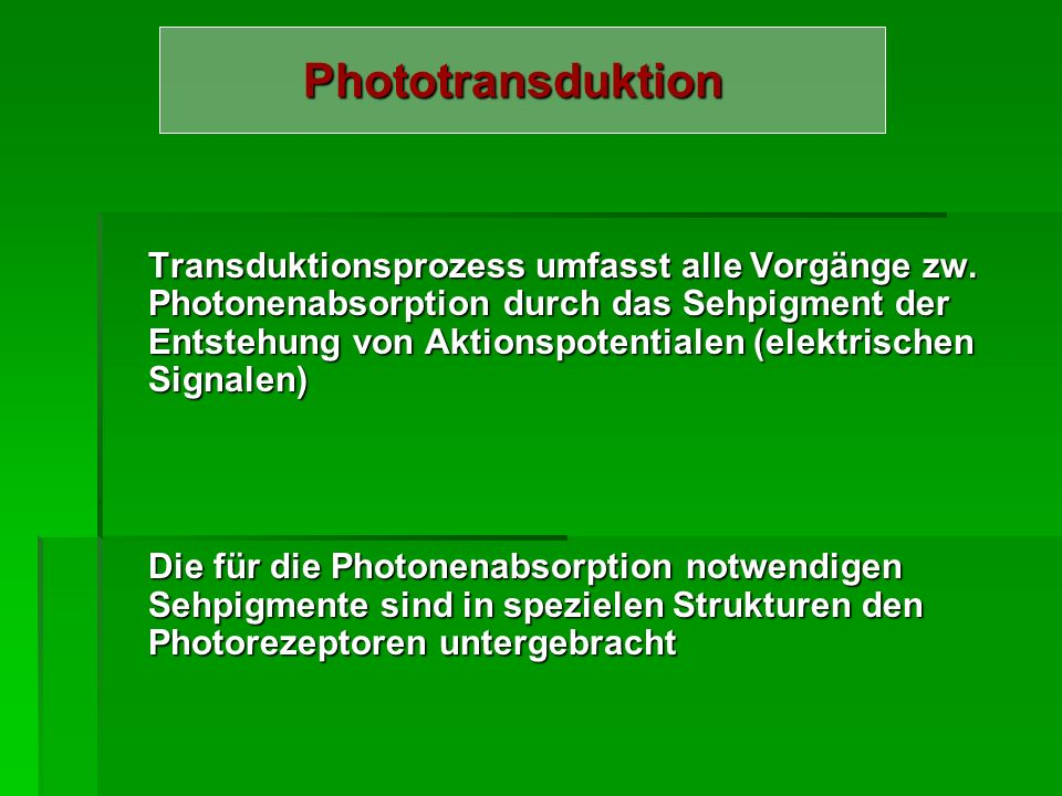 Phototransduktion