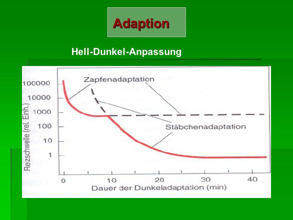 Adaption Hell-Dunkel-Anpassung