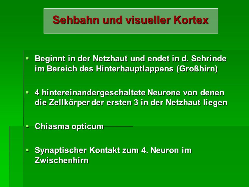 Sehbahn und visueller Kortex
