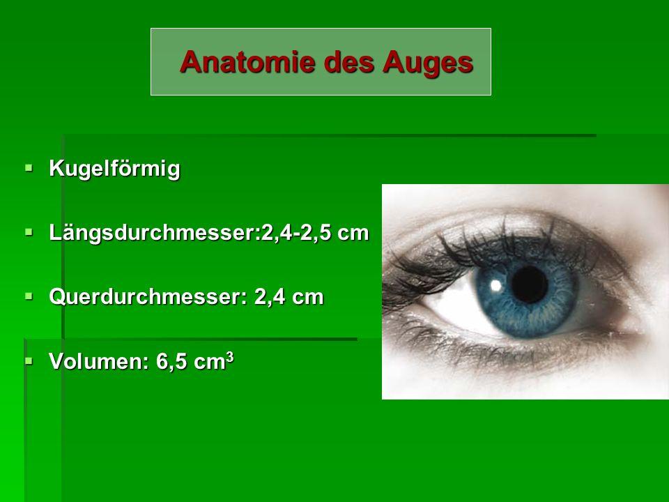 Anatomie des Auges Kugelförmig Längsdurchmesser:2,4-2,5 cm