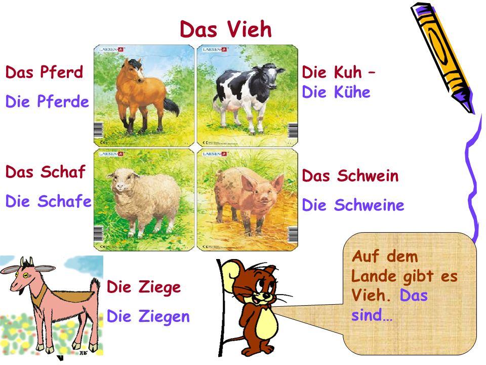 Das Vieh Das Pferd Die Pferde Die Kuh – Die Kühe Das Schaf Die Schafe