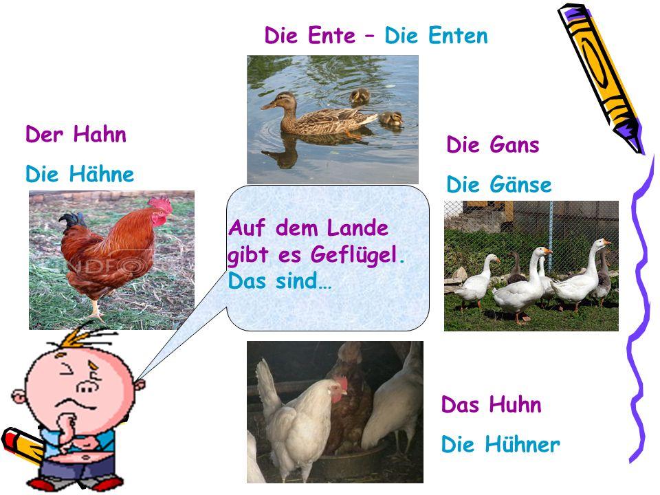 Die Ente – Die EntenDer Hahn. Die Hähne. Die Gans. Die Gänse. Auf dem Lande gibt es Geflügel. Das sind…