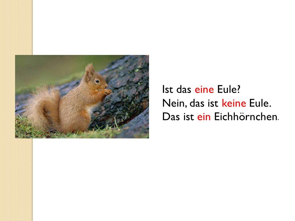 Ist das eine Eule Nein, das ist keine Eule. Das ist ein Eichhörnchen.