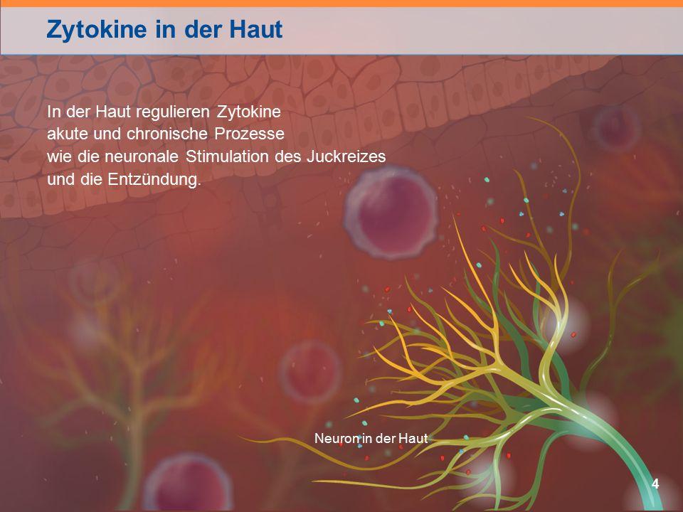 Zytokine in der Haut In der Haut regulieren Zytokine