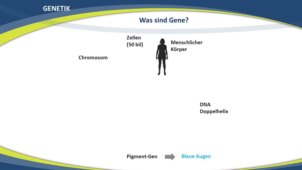 GENETIK Was sind Gene Zellen (50 bil) Menschlicher Körper Chromosom