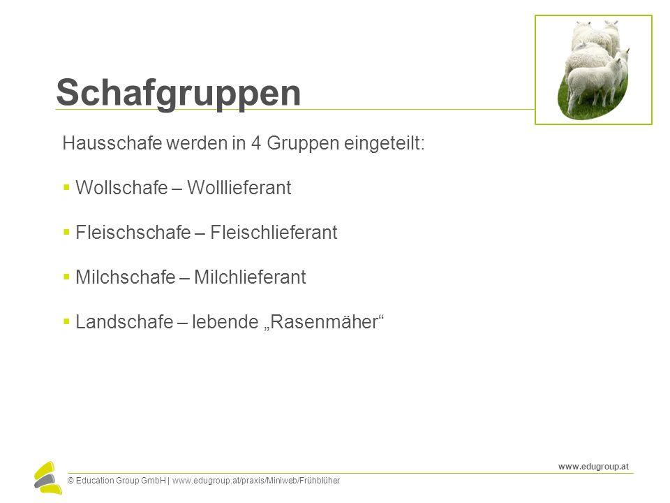 Schafgruppen Hausschafe werden in 4 Gruppen eingeteilt: