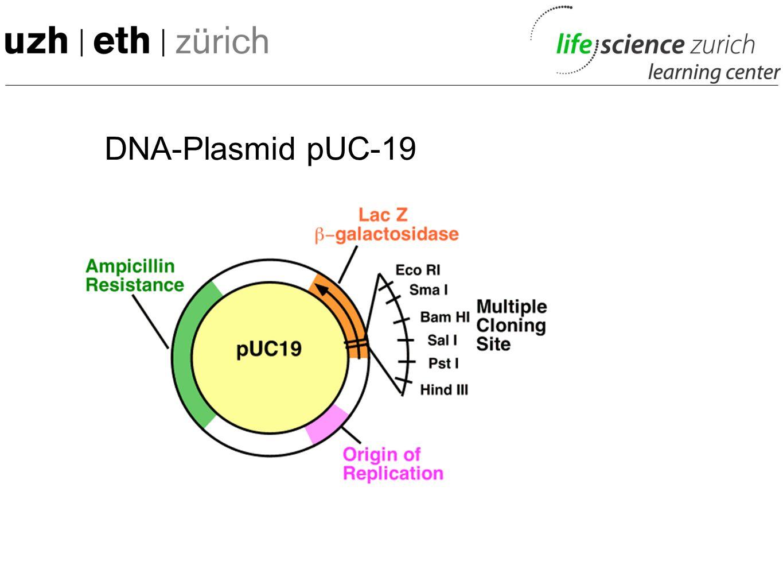 DNA-Plasmid pUC-19 M: erkläre kurz MCS, Ori, Amp, LacZ