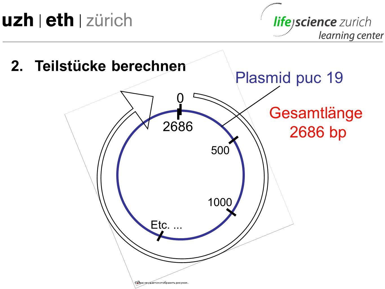 Plasmid puc 19 Gesamtlänge 2686 bp 2. Teilstücke berechnen 2686 500