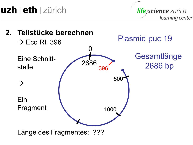  Eco RI: 396 Plasmid puc 19 Gesamtlänge 2686 bp