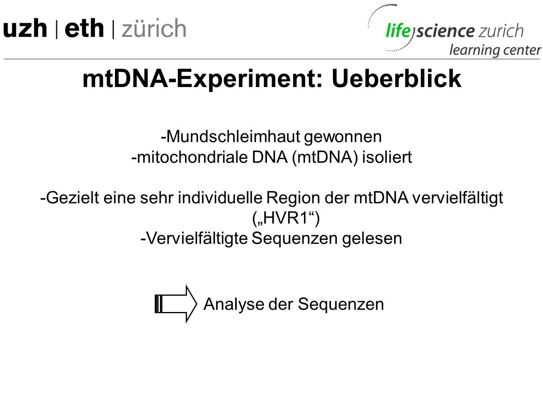 mtDNA-Experiment: Ueberblick