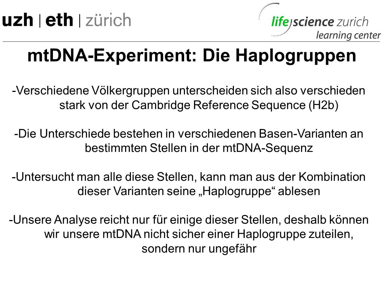 mtDNA-Experiment: Die Haplogruppen