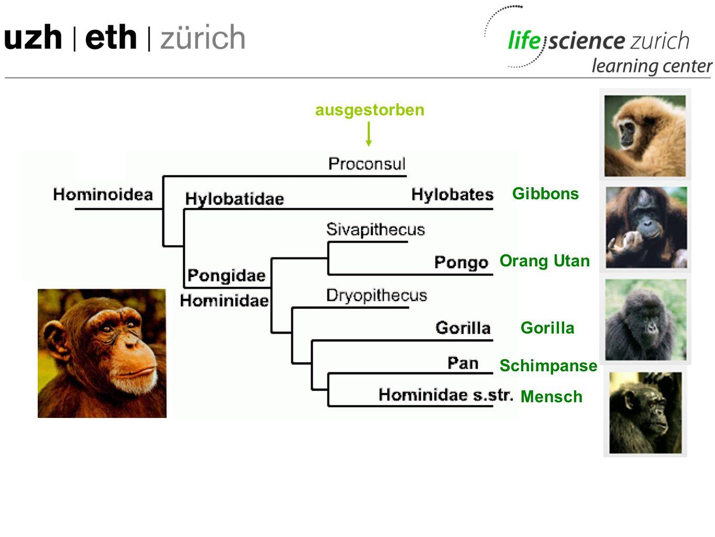 ausgestorben Gibbons Orang Utan Gorilla Schimpanse Mensch 50