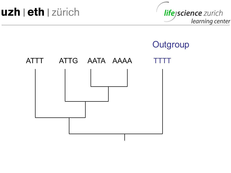 Outgroup ATTT ATTG AATA AAAA TTTT 55
