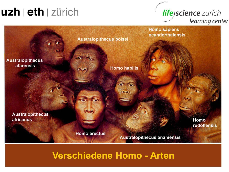 Verschiedene Homo - Arten