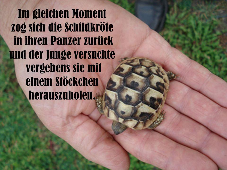 zog sich die Schildkröte in ihren Panzer zurück