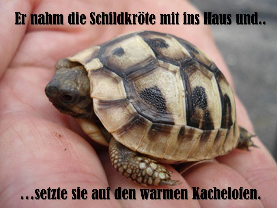 Er nahm die Schildkröte mit ins Haus und..
