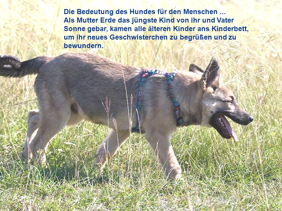 Die Bedeutung des Hundes für den Menschen ...