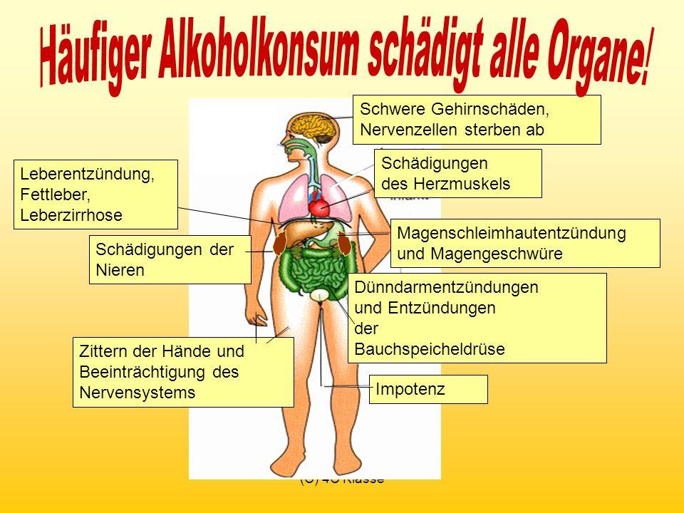 Häufiger Alkoholkonsum schädigt alle Organe!