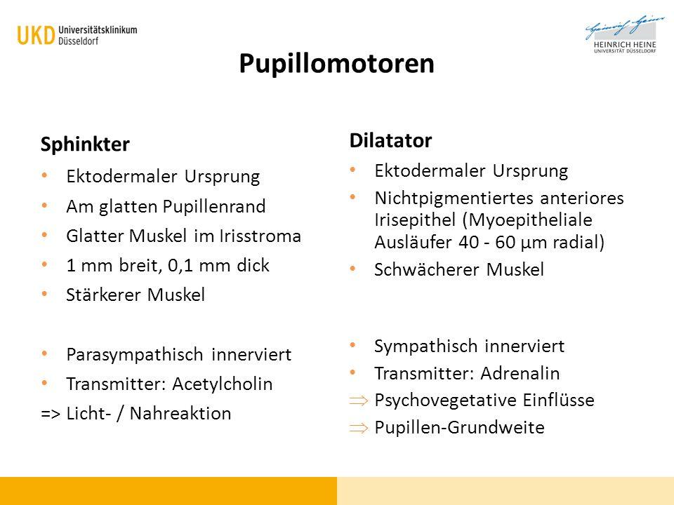 Pupillomotoren Dilatator Sphinkter Ektodermaler Ursprung