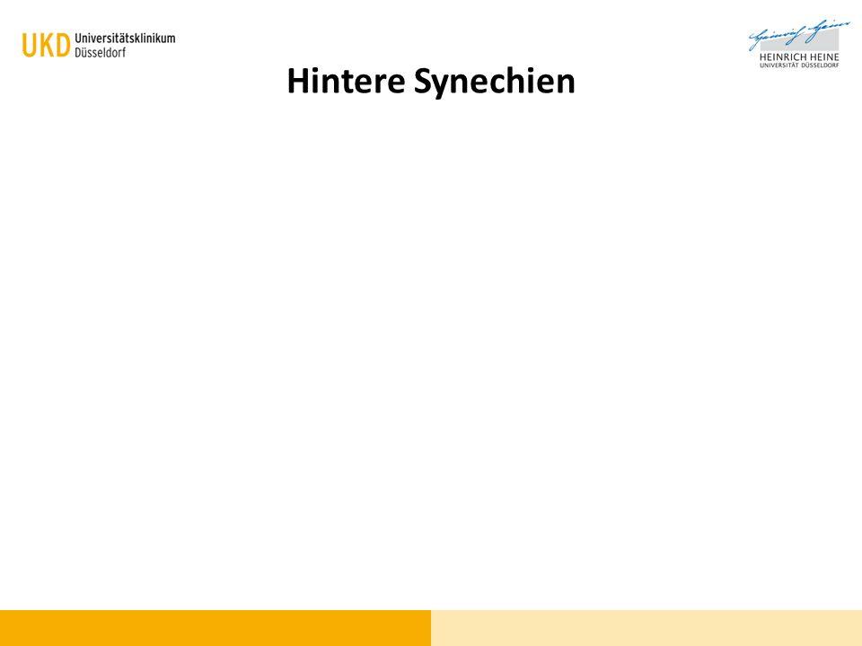 Hintere Synechien