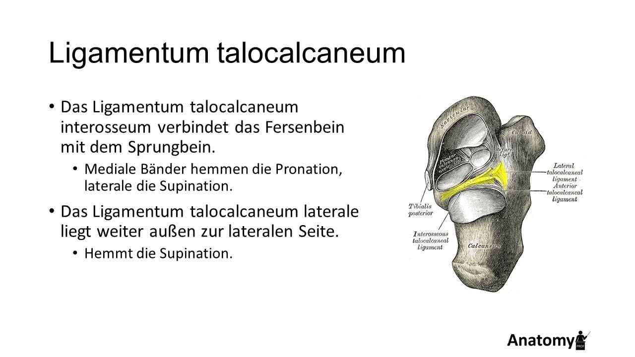 Ligamentum talocalcaneum