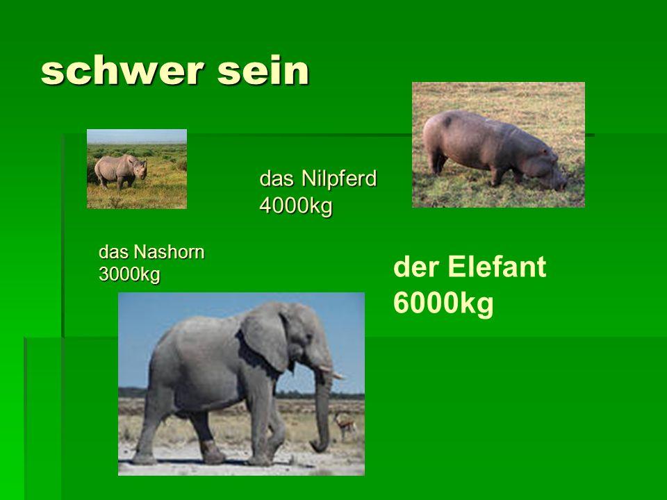 schwer sein das Nilpferd 4000kg das Nashorn 3000kg der Elefant 6000kg