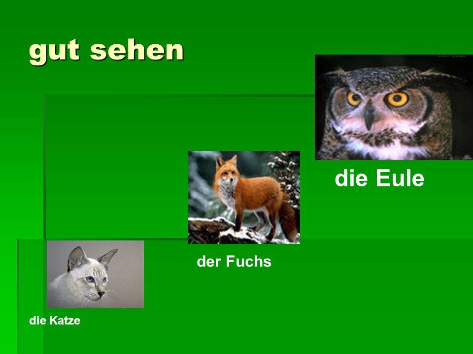 gut sehen die Eule der Fuchs die Katze