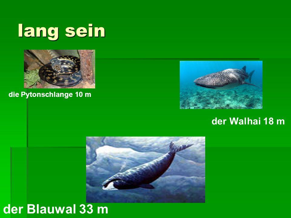 lang sein die Pytonschlange 10 m der Walhai 18 m der Blauwal 33 m